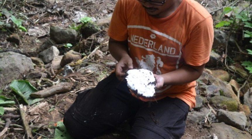 Misteri orang pendek di Taman Nasional Kerinci Seblat