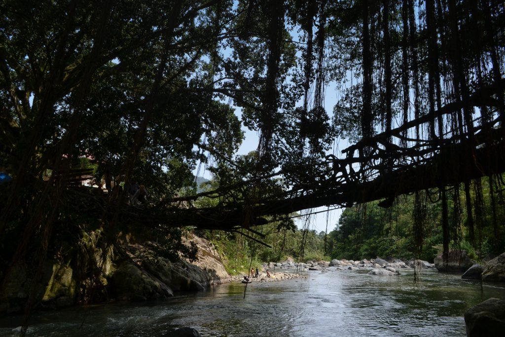 Jembatan Akar (Jalin Akar Dua Beringin)