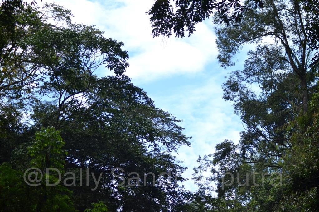 Hutan Sako