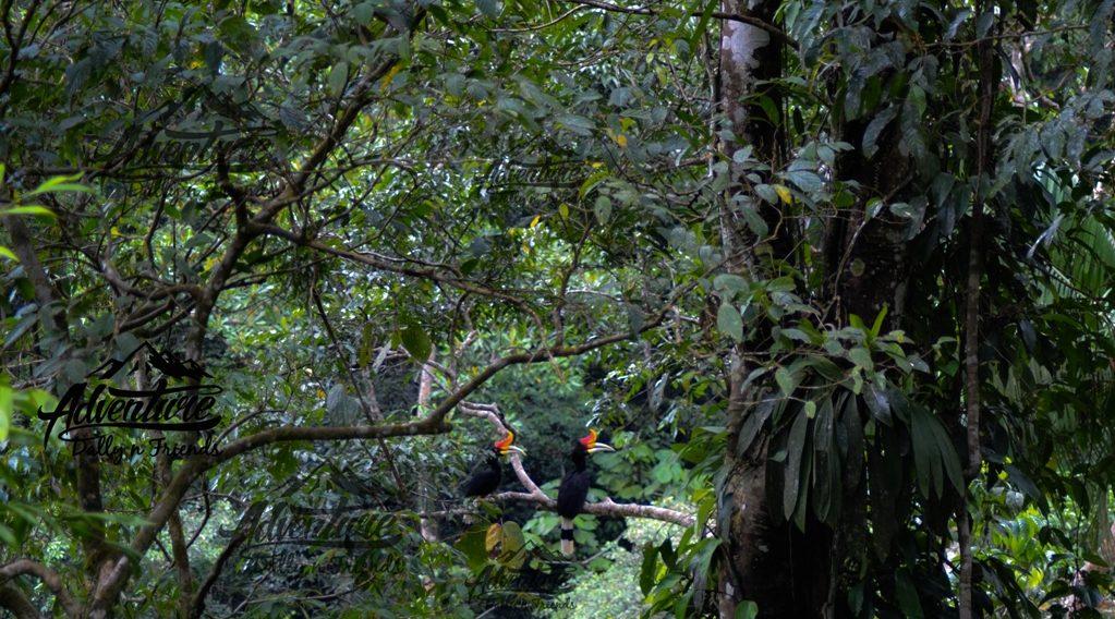 Menelusuri Hutan Sako Tapan, Ada Banyak Bonus